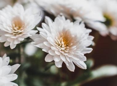florist-brand-shoot