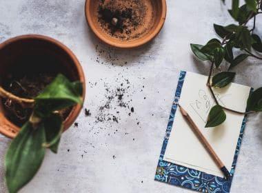 Plant Repotting
