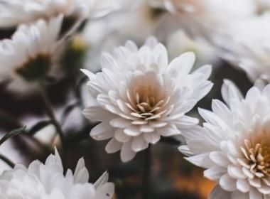 Floral Background Image