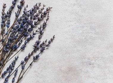 lavender-stock-frame
