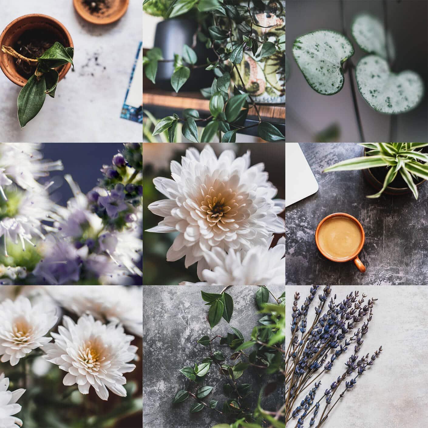 florist photography subscription grid images